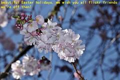 Holiday Easter 2014 ! (dicau58) Tags: myfavorite masterphotos artisticflowers flickrisslow mindigtopponalwaysontop