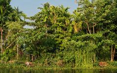 Kerala Backwaters 6 (RaKra42) Tags: india landscape landscapes asia kerala landschaft indien backwaters