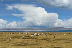 -170.jpg (Fzz7) Tags: china tibet d800   nikon70200f4 summer2015
