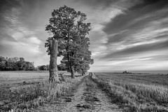 Along the field (jarnasen) Tags: road trees sky blackandwhite bw nature monochrome field clouds landscape mono alley nikon track conversion sweden outdoor path wideangle handheld dirtroad sverige freehand scandinavia landskap stergtland stgtasltten ledberg d810 nordiclandscape 1635mmf4