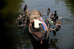 Fisherman & Cormorants & (MelindaChan ^..^) Tags: life china bird water cormorants fisherman mel melinda jiangsu xinghua     chanmelmel melindachan