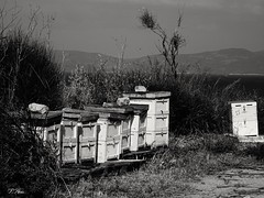 beehives...! (panoskaralis) Tags: sea nature seaside hellas bee greece lesbos beehives mytilene aegeansea lesvosisland