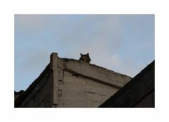 Sentinelle (hlne chantemerle) Tags: blue sky cloud black wall cat evening triangle chat noir angle bleu ciel nuage soir mur