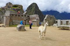 Główna świątynia Machu Picchu | The Main Temple of the Machu Picchu