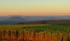 In Gold getaucht (isajachevalier) Tags: licht natur sachsen landschaft sonnenaufgang lilienstein schsischeschweiz elbsandsteingebirge hohburkersdorferrundblick