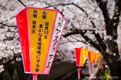 Cooperation / Tokyo, Japan (yameme) Tags: travel flowers nature japan canon eos tokyo  sakura shinagawa cherryblossoms    meguro    24105mmlis  5dmarkii 5d2