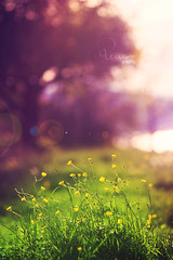 (remography) Tags: flowers sun color tree schweiz switzerland evening abend photo spring nikon foto blumen sonne farbe baum frhling 135mm d700