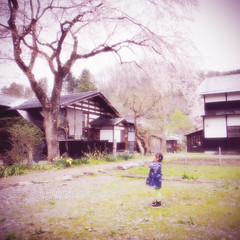 This Lovely Life  II #317 (matchan*camera) Tags: life family pink boy portrait house tree cute 6x6 girl japan kids children square fun happy spring blossom hideandseek squareformat cherryblossom mm lovely 1x1 wkn