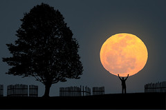 The Big Moon (Carlos Gotay Martnez) Tags: trees sky moon man field silhouette fence horizon moonrise perigee myfriendrobert supermoon perigeefullmoon