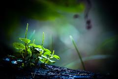 Waiting for a new day (Tarek_Mahmud) Tags: camping macro nature leaf pakotia
