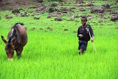 Boy and Donkey (Peter Schnurman) Tags: africa boy donkey ethiopia