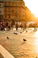 00267 (ferdinand sluiter) Tags: city light summer people urban sun milan square 50mm evening nikon milano ferdinand duomo doves mailand d90 sluiter