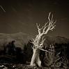 Patriarch Grove #1 (After Dark Photo) Tags: longexposure nightphotography blackandwhite mountains film night stars whitemountains alpine nightsky startrails ilfordhp5400 rolleiflex35 bristleconenationalforest nocturanal silvereffex
