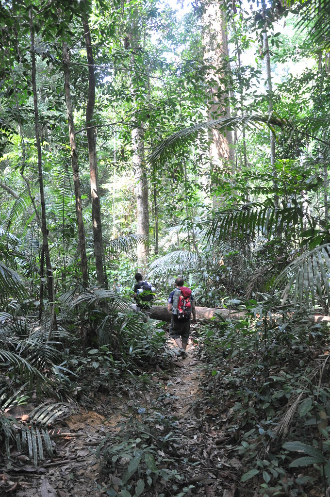 Another day, another trail, Taman Negara National Park, Malaysia