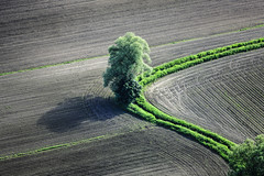 Verve (Aerial Photography) Tags: tree field by creek la weide cornfield landwirtschaft feld aerial bach brook agriculture baum singletree willowtree luftbild bogen leaftree luftaufnahme einzelbaum maisfeld ndb laubbaum deciduoustree ackerbau pfrombach foliagetree buchaerlbach niedererlbach 24052008 fotoklausleidorfwwwleidorfde 1ds07468