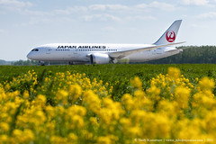 Japan airlines 787 with flowers (Vasily Kuznetsov) Tags: boeing spotting dme jal japanairlines planespotting b787 domodedovo dreamliner uudd