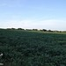 "Illinois Land for Sale - 65 Acres in Knox County • <a style=""font-size:0.8em;"" href=""http://www.flickr.com/photos/66358149@N06/7698810394/"" target=""_blank"">View on Flickr</a>"