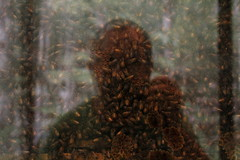 Halifax, NS (Avard Woolaver) Tags: light summer selfportrait canada colour reflection topf25 glass photo flickr novascotia bees halifax honeycomb canondslr beehive museumofnaturalhistory colony 2012 digitalimage hrm august12 contemporarylandscape sociallandscape topf25faves canoneos60d avardwoolaver avardwoolaverphoto startcafe2012