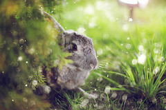 IMG_4331 (hobopeeba) Tags: tree rabbit bunny water pool grass leaves hare bokeh willow canon50mm12 5dmarkiii