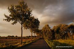 Allee in der Abendsonne (grafenhans) Tags: 55 landschaft slt abendsonne grafenwald sensenfeld