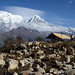 Sheepherders and Annapurna South