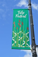 The Albany Tulip Festival street flag banners in the capital city of Albany, New York, USA (RYANISLAND) Tags: flowers flower spring tulips 17thcentury nederland upstateny na tulip albany empirestate newyorkstate albanyny nederlands springflowers tulipfestival albanynewyork iloveny flowerfestival springflower tulipflower newamsterdam ilovenewyork tulipflowers theempirestate albanytulipfestival kingdomofthenetherlands dutchsettlement ny flower flowers spring newyork nyc springtime newyorkcity ilovenewyorkspringdestination albanyny albanynewyork albanytulipfestival tulipfestival tulips dutchtulips upstatenewyork nys springflowers orangewonder orangewondertulip queenwilhelmina holland thenetherlands netherlands dutch welcomespring tulip