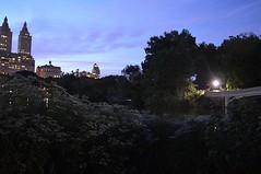 Central Park Bow Bridge and San... (danielmulcahy) Tags: tourism centralpark tourist views nightshots bowbridge prophotographer prophotographers nikonphotography uploaded:by=flickstagram instagram:venue=371925298 instagram:photo=108306224186591167440355914 instagram:venuename=bowbridge