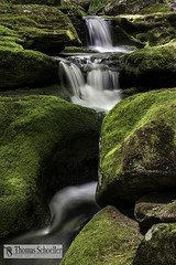Zen Moss~River Rock and waterfalls (Thomas Schoeller Photography) Tags: green moss connecticut smooth peaceful serenity berkshires verdant wilderness mossy riverrock hartland naturephotography silken mountainstreams outdoorphotography naturetherapy barkhamsted ecotherapy southernnewengland fallsbrook newenglandwaterfalls tunxisstateforest connecticutwaterfalls connecticutscenics westhartland acrylicprints sceniclandscapesofct thomasschoeller naturefineartprints mentaltherapy verdantscenes healingwithnature