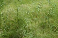 (lemank) Tags: grass mountsbotanicalgardens