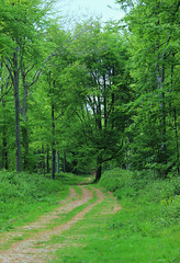 Nore wood (ekaterina alexander) Tags: pictures wood trees england tree green nature woodland photography sussex spring woods path national trust alexander beech nore ekaterina
