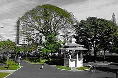 Park green color (Dedalos19) Tags: park parque verde green uberlandia selectivo