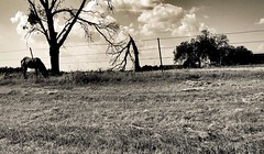 Grazing (photo.po) Tags: trees sky horse west clouds landscape tx western dfw grazing iphone openfield fortworthtx iphonephotography iphone6