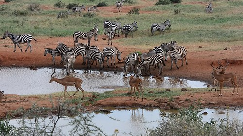 African Morning at the Water Hole - BJGH_6314