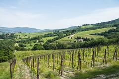 Greve in Chianti - Vicchiomaggio Wine Estate Vines 2 (Le Monde1) Tags: italy castle florence nikon wine vine tuscany tasting renaissance greve grapevine greveinchianti d610 castellovicchiomaggio lemonde1