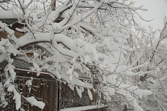 DSC_6525 (Debbie Prediger Photography) Tags: white snow canada storm wet photography spring fluffy alberta debbie heavy prairies cadogan springsnowstorm prediger