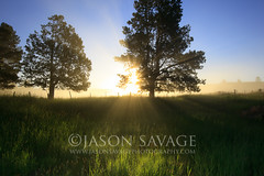 Sunrise (www.jasonsavagephotography.com) Tags: morning trees mist grass fog sunrise montana peace tranquility sunburst meditation sunrays naturephotography blackfootriver outdoorphotography photographyworkshops jasonsavage jasonsavagephotography