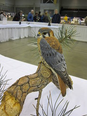 IMG_8602 (Robert Hand) Tags: bird carving foundation ward decoys