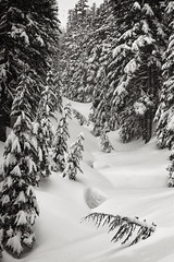 Tillie Jane Creek, Mt. Hood (Scott Withers Photography) Tags: oregon mthood cooperspur canon50mmf12l tilliejanetrail