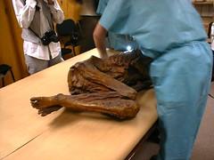 Archivos Endomdica | Estudio con Momias (Endomdica) Tags: de cook medical e imagenes nacional historia estudios momias instituto inah antropologia gastro gastroenterologia endoscopia endomedica siimed endoscopicos