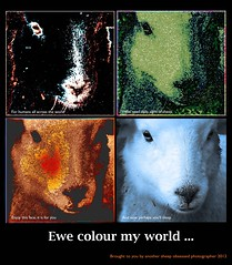 ewe colour my world (Angelahalpin100) Tags: poster artwork poem message sheep sleep photoshopped poetryandpicturesinternational aboutpoetryandphotographsnotjustphotographs