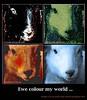 ewe colour my world (Angelahalpin100) Tags: poster artwork poem message sheep sleep photoshopped poetryandpicturesinternational aboutpoetryandphotographsnotjustphotographs