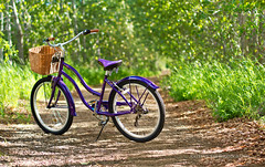 I Like To Ride My Bicycle (Katelyn's Photostream) Tags: cruise nature bike canon 50mm scenery bokeh path 7d summertime birch cruiser norco watermark birchtrees beachcruiser cruiserbike purplebike katelynrae