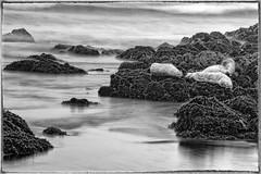 "Sleeping-Seals (James A. Crawford - ""Crawf"") Tags: ocean california longexposure bw seascape beach water animals canon rocks wildlife seals canoneos sanluisobispo cs5 colorefexpro silverefexpro"