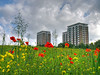 Flowers and towers (Mr Grimesdale) Tags: wildflowers northwood knowsley kirkby stevewallace ruffwood mrgrimesdale kirkbywildflowers northwoodkirkby