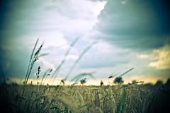 field trip fridays (angsthase.) Tags: sky blur green clouds germany deutschland weeds himmel wolken nrw grün dailylife friday ruhrgebiet dortmund freitag 2012 ruhrpott mft micro43 olympuspenepl1 slrmagictoylens26mmf14
