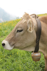 Cowbell (Frankhuizen Photography) Tags: alps austria cowbell 2012 warth brownswiss