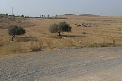 20090603_1833_1010826.jpg (m.vgunten) Tags: spain andalusia r2 fernnprez flickr2009 bikeespaa picasa2009