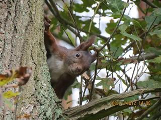 Eichhörnchen, NGIDn1128109939