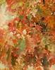 Oak Leaves Turning Red (scilit) Tags: autumn red tree nature leaves oak redoak textured memoriesbook awardtree tatot artistictreasurechest magicuniverse