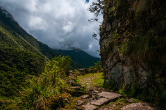 Cam yunga (faltimiras) Tags: trekking trek real la track camino llama paz bolivia cami cordillera altiplano choro cumbre yolosa yunga altipla